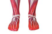 https://www.amazon.com/Living-Royal-Muscle-Crew-Socks/dp/B015WUBSEY/ref=sr_1_13?ie=UTF8&qid=1532278113&sr=8-13&keywords=anatomy+socks